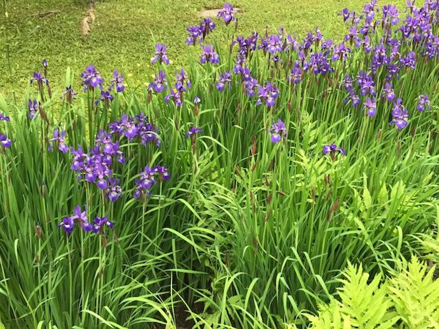 Wildflowers June 24